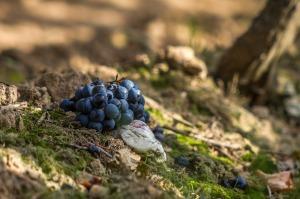 grapes-970462_1280