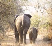 別讓世界只剩下動物園.elephants