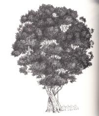 tree.p92